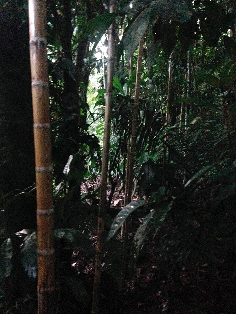 Se colocaron estacas de bambú para sostener el rollo de papel fotosensible s que fue expuesto en la oscuridad de la noche.