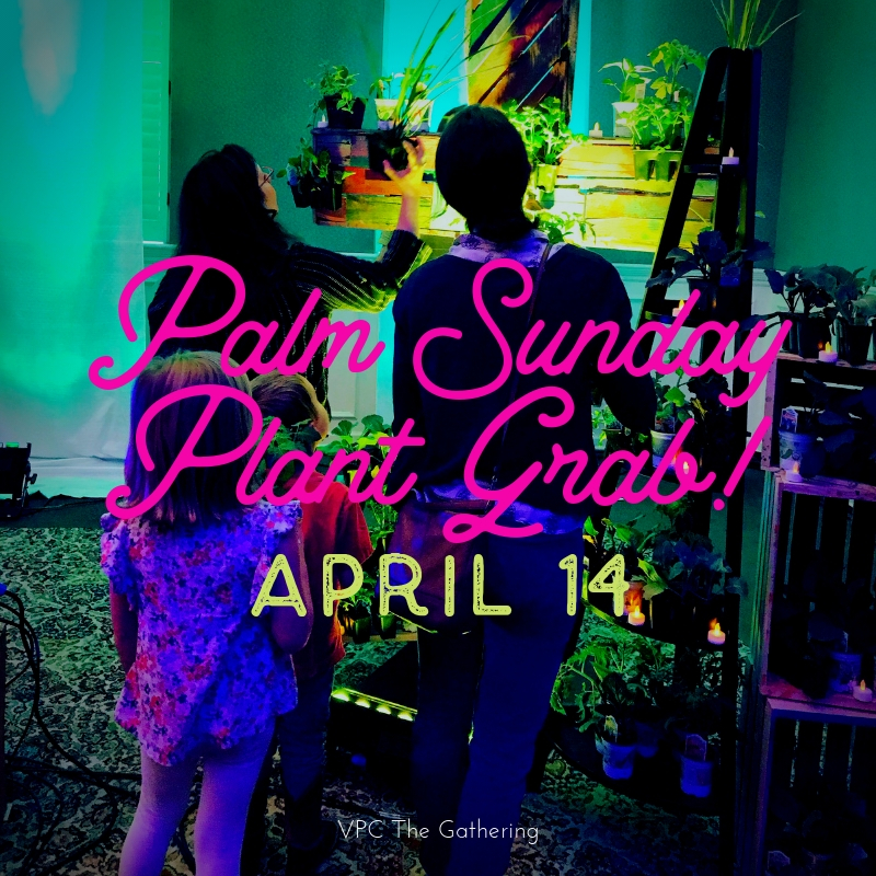 Palm Sunday Plant Grab2.jpg