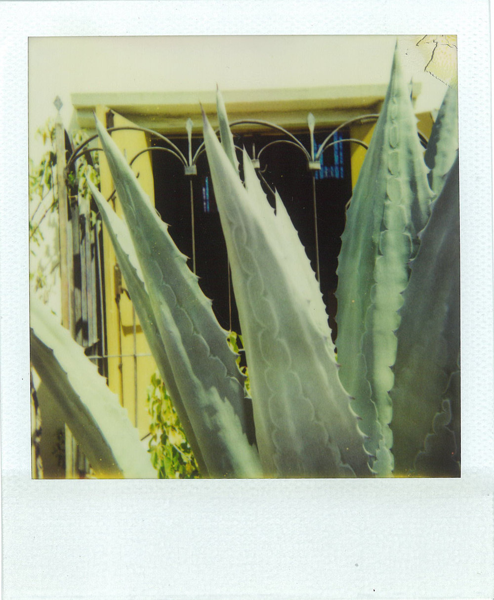 Polaroid from the Serra Retreat, Malibu, California by Harold Budd.