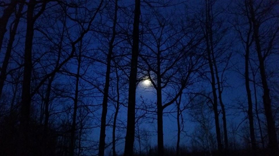 moon through trees.jpg