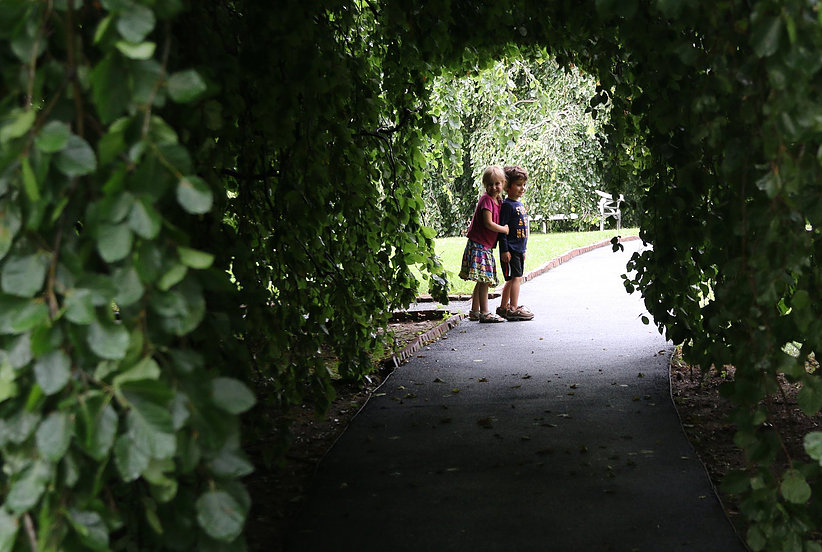 Take a walk through one of two Weeping Beech trees at Andrus on Hudson