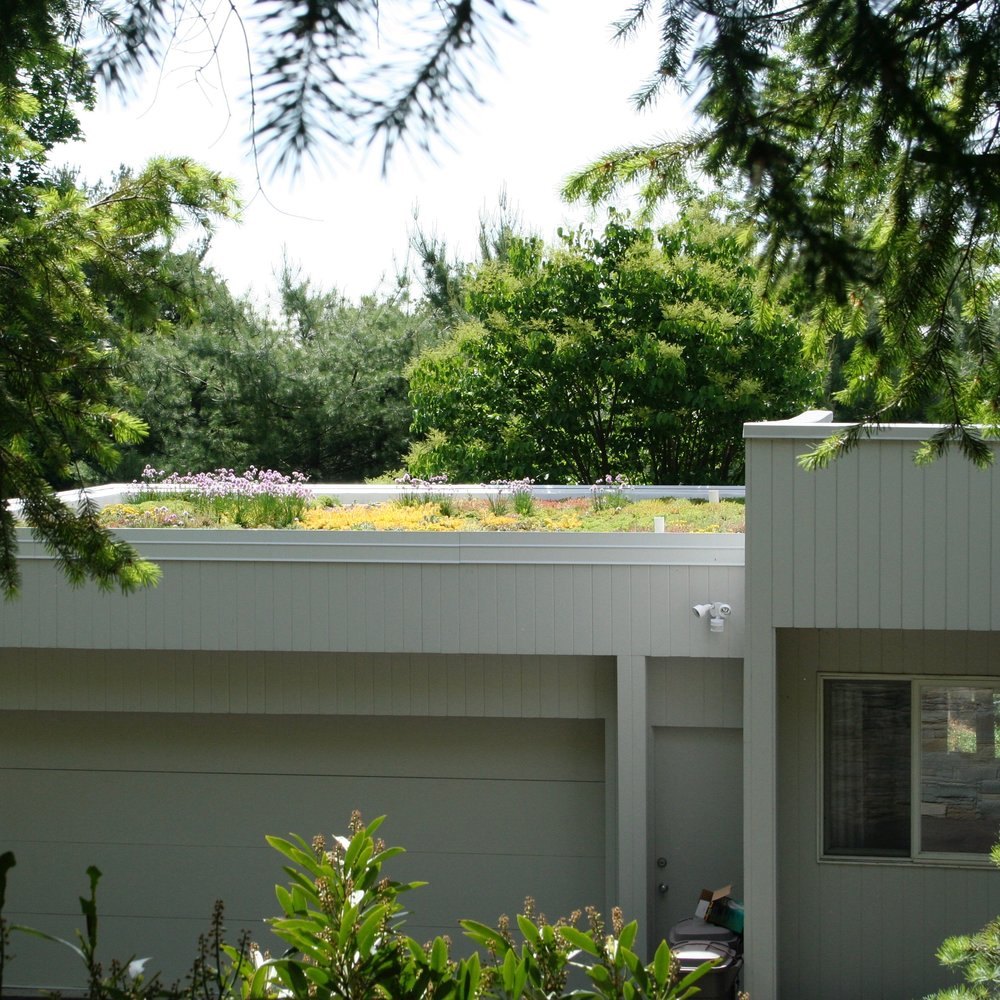 On a Montclair home visible from the road, this extensive Green Roof is keeping a flat black roof at least 20 degrees cooler in summer, lowering the homeowner's air conditioning costs in summer and providing a extraordinary, lively view where once was black tar.