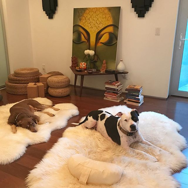 The boys are ready for meditation 🐶 📿 • • • This fall marks 16 years of my #yoga practice. In 2001, I officially found yoga in Minnesota through an #ashtanga workshop @yogacentermpls  I connected to the practice immediately-- a flood gate opened and hasn't closed. Yoga has taken me -- and has been with me -- in and through and all over -  the inner, the outer, and the spaces-in-between worlds. I have learned that all beings - who I am willing to allow - are a teacher and that all spaces are sacred spots for practice. Lately, my daily practice on the mat is really internally focused and homebound in sacred space.  I am grateful for all that yoga has taught me, including how to be with myself.  #yogateacher #yogalife #sacredspace #rescuedogsofinstagram
