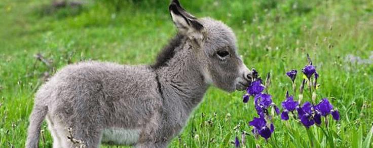 donkey6.png