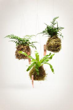 koke dama--air-plants-indoor-plants.jpg