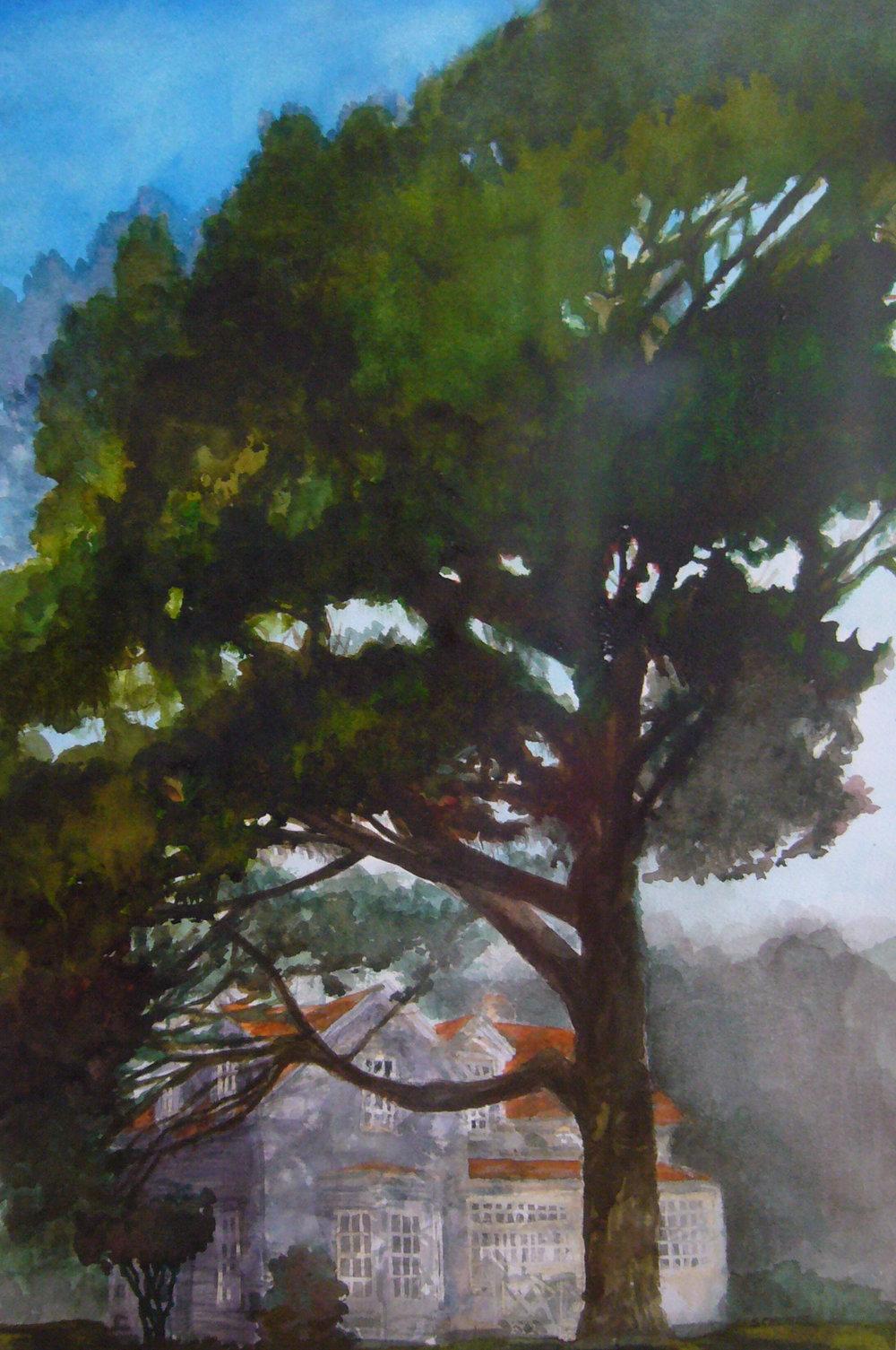 Presidio Pine