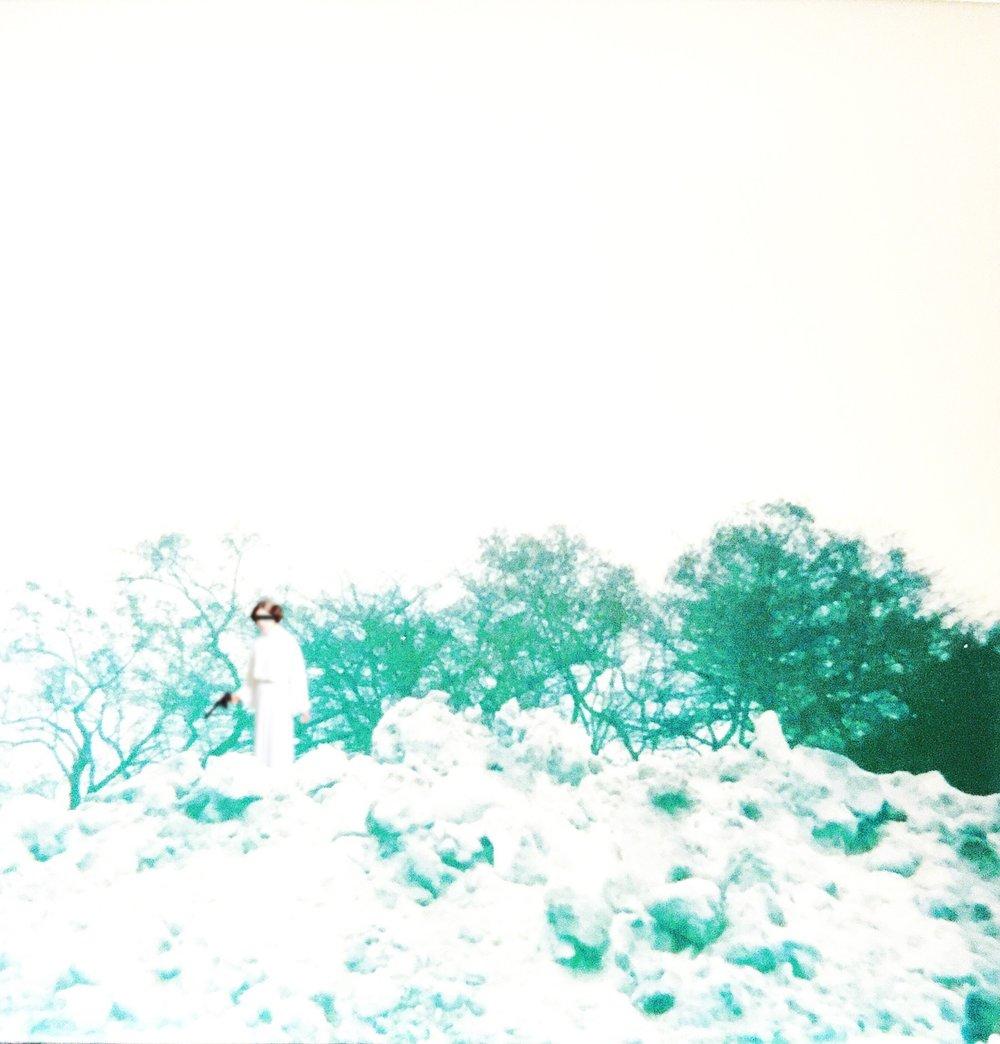 Rebel Snow Field - 1