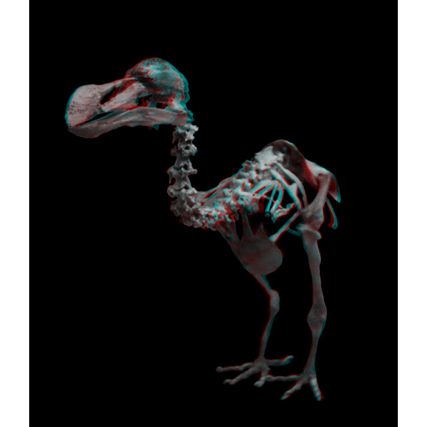 DodoBird-3D.jpg