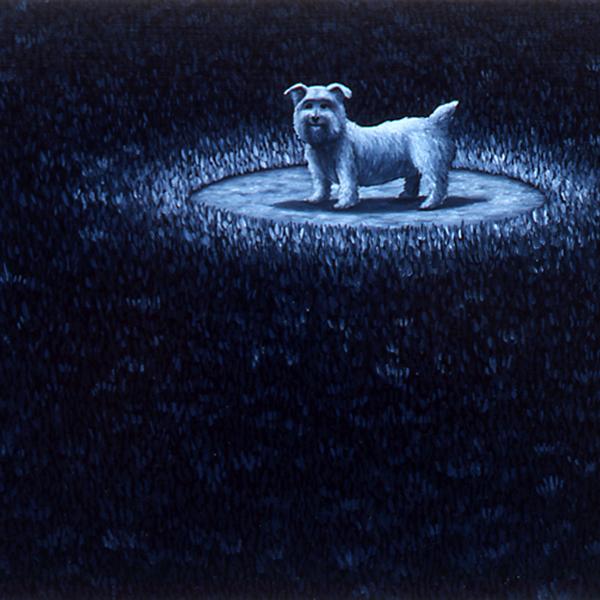 dogsofmedina_19.jpg