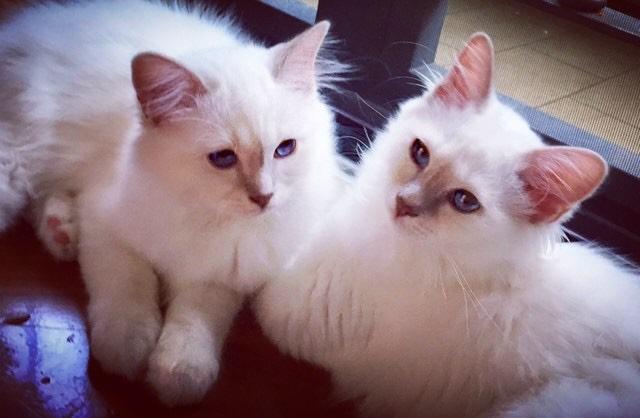 Leo & Teo