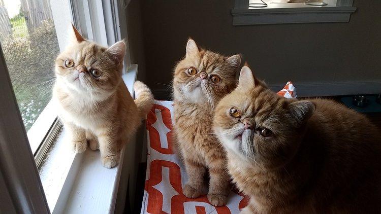 Seamus, Angus + Claire