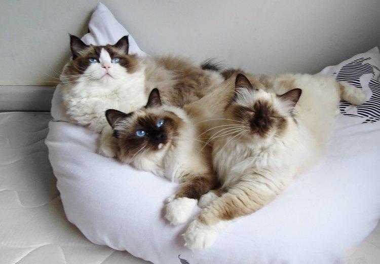 Lola, Nina + Olan