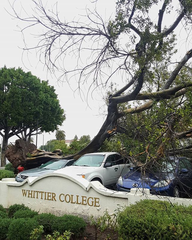 FALLEN TREE IN CAMPUS INN LOT . . . At 9:52am, Campus Safety sent an alert to the Whittier College campus that a tree had collapsed in the Campus Inn parking lot. No one was injured and at least 3 cars were damaged. . . . Campus Saftey is asking that everyone stays clear of this area until safe and to check messages and emails for more alerts. #nbc4la #abc7eyewitness #ktla