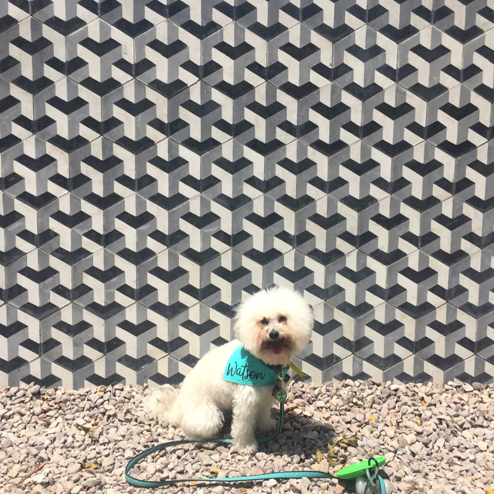 Watson by the black and white tile at the skate park in Todos Santos, BCS Mexico | Watson & Walls