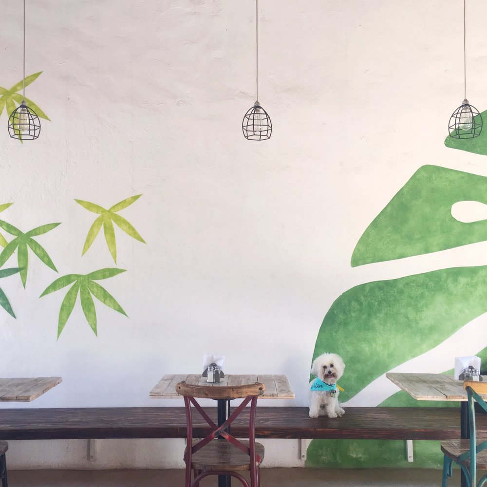 Leaf mural at La Morena in Todos Santos, BCS Mexico | Watson & Walls