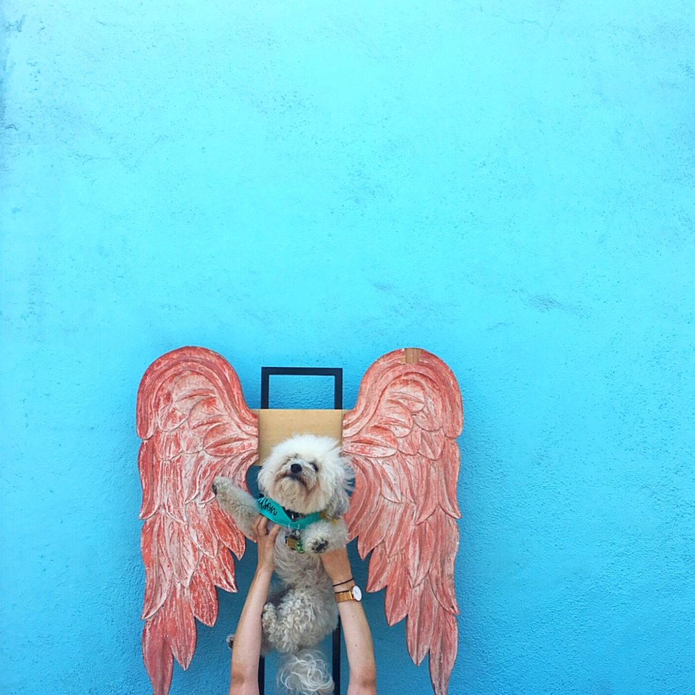 Watson with wings outside of Nomad Chic in Todos Santos, BCS Mexico | Watson & Walls