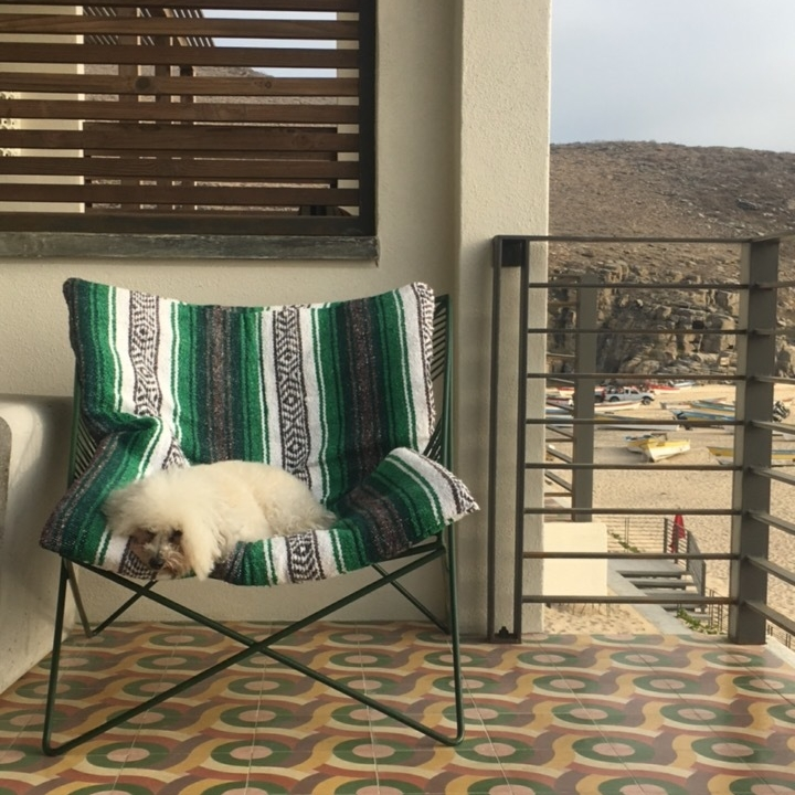 Watson on the balcony at the Hotel San Cristobal in Todos Santos, BCS Mexico | Watson & Walls