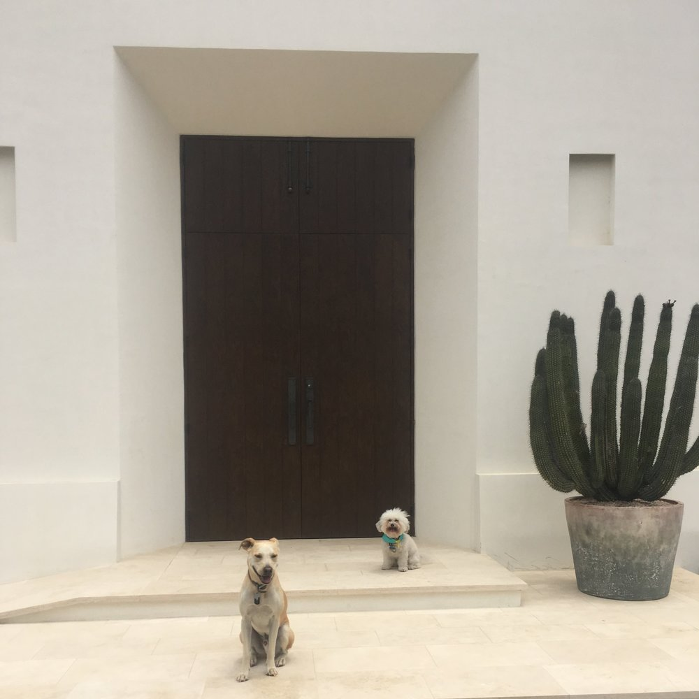 Watson and Bruno by the cathedral at the Hotel San Cristobal in Todos Santos, BCS Mexico | Watson & Walls