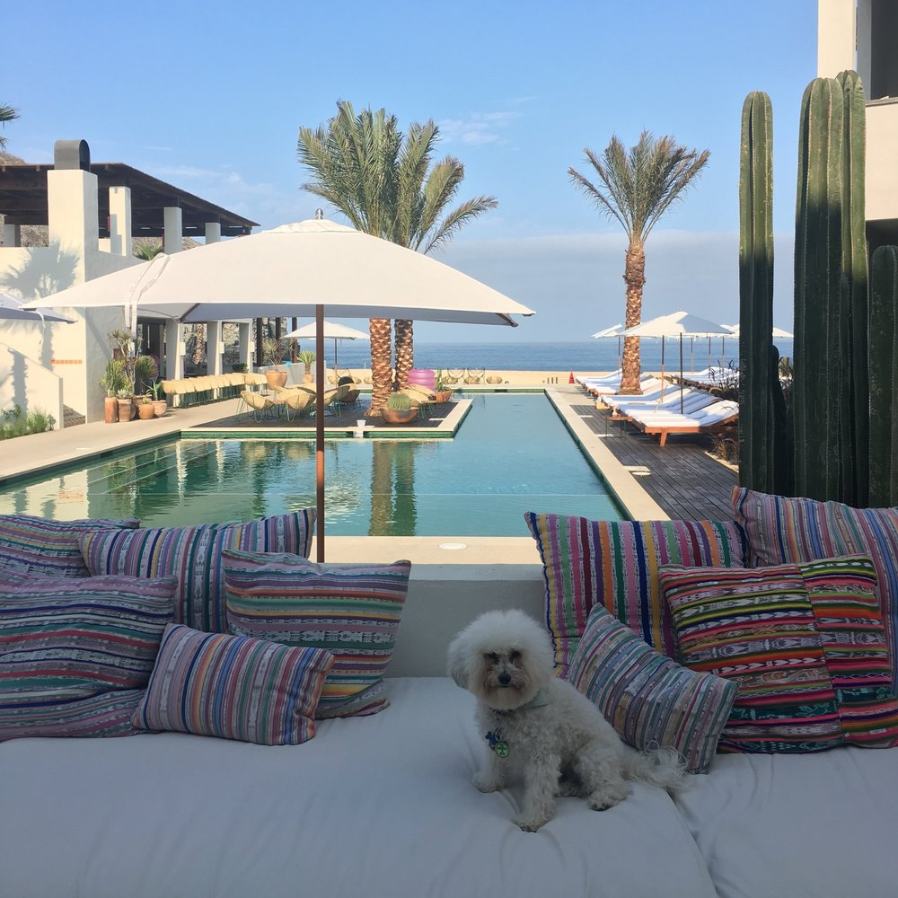 Watson by the pool at the Hotel San Cristobal in Todos Santos, BCS Mexico | Watson & Walls