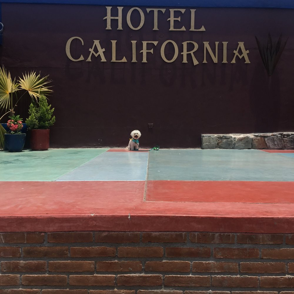Hotel California in Todos Santos, Mexico | Watson & Walls