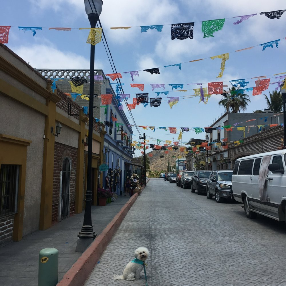 Flags in Todos Santos, Mexico | Watson & Walls