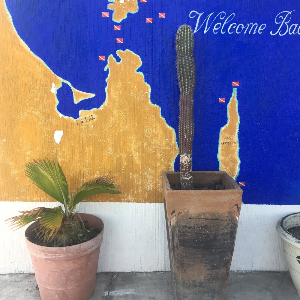 Street Art at the Cortez Club for snorkeling in La Paz, Mexico | Watson & Walls