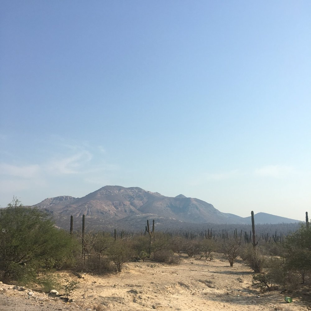Cacti for miles on the road by La Paz, Mexico | Watson & Walls