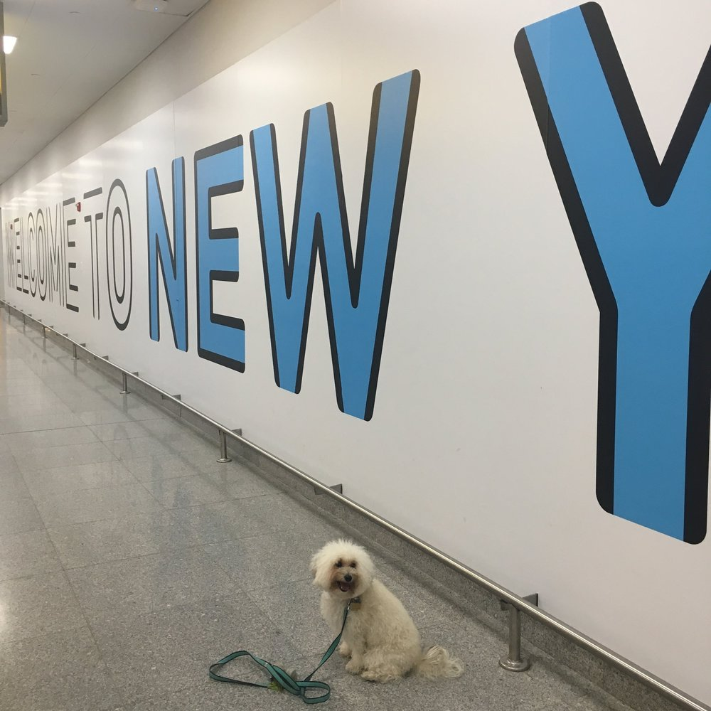 Watson at JFK airport in New York, NY | Watson & Walls