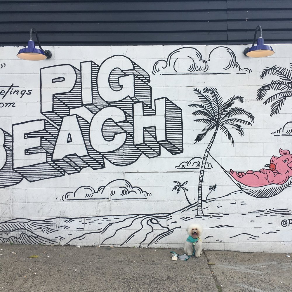 Watson at Pig Beach in Brooklyn, New York | Watson and Walls
