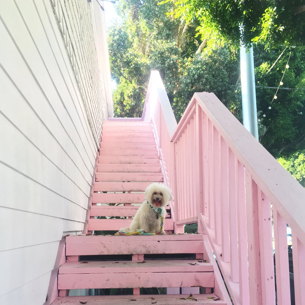 Pink Stairs at the Victorian