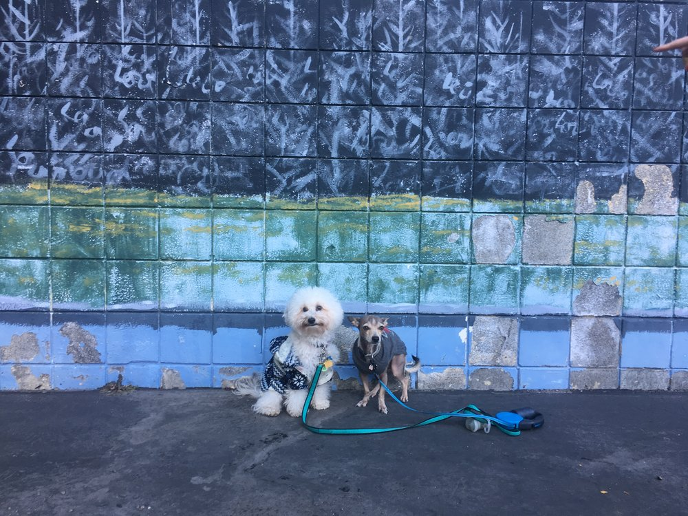 Watson and his friend Freddy by a mural in South Lake Tahoe, CA | Watson & Walls