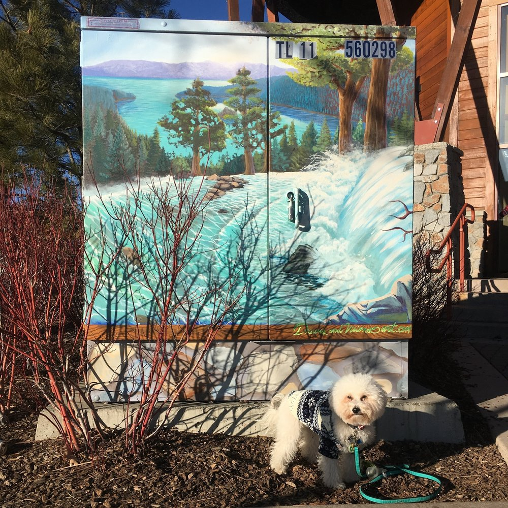 Watson by a mural by Gunbarrel in South Lake Tahoe, CA | Watson & Walls