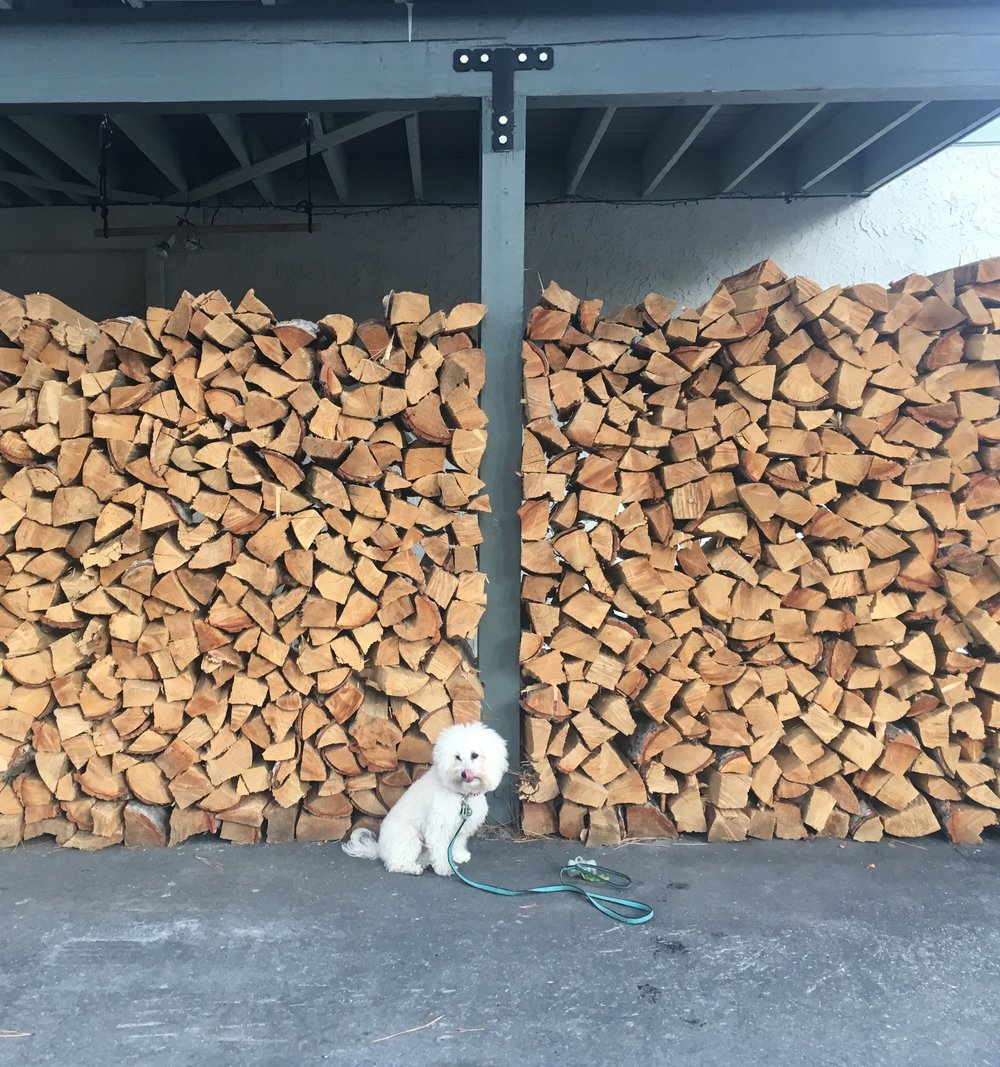 Watson by a pile of wood in South Lake Tahoe, CA | Watson & Walls