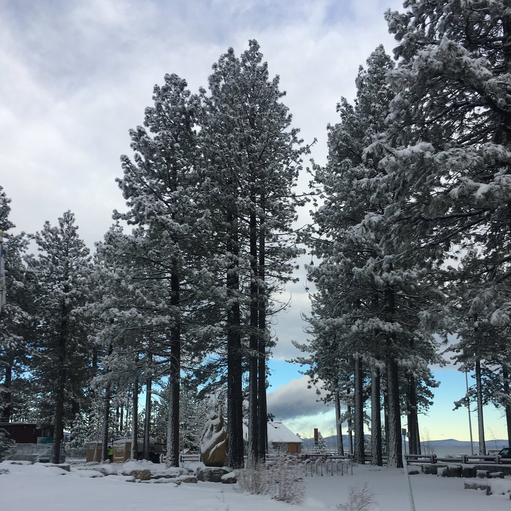 Watson enjoying the outdoors and Heavely in the snow of South Lake Tahoe, CA | Watson & Walls