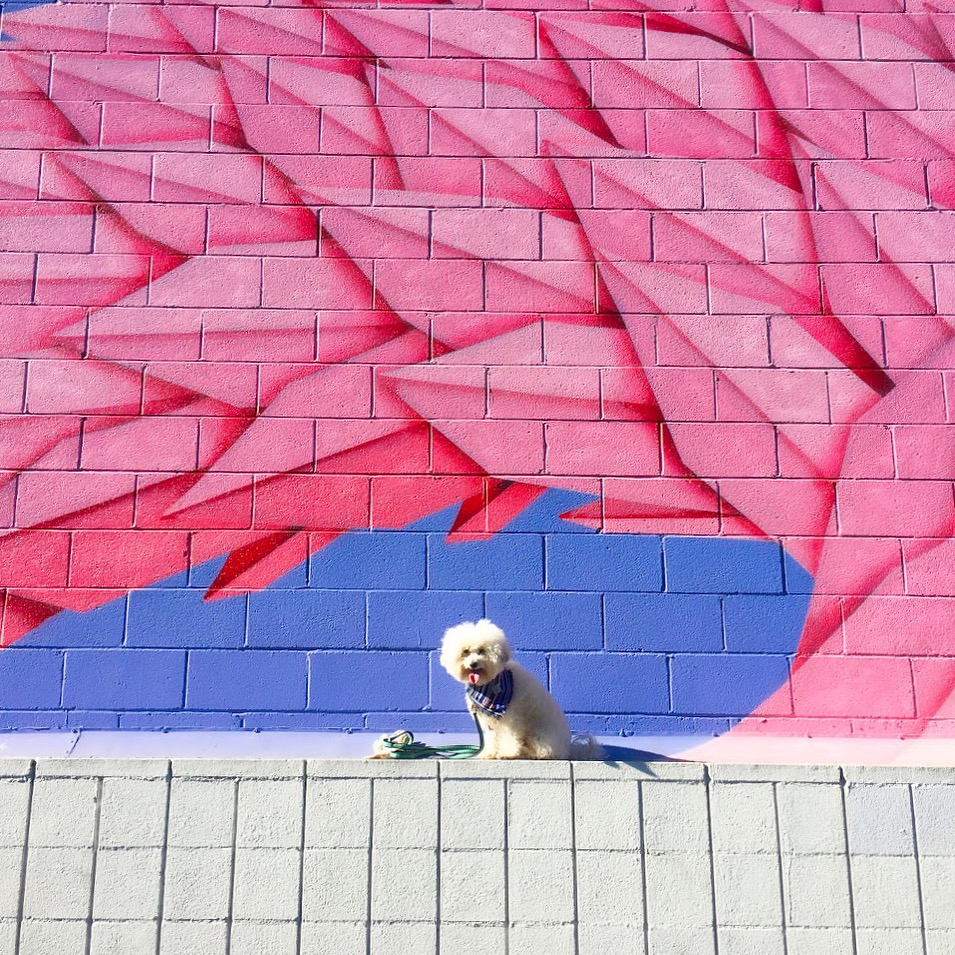 Watson with pink and purple wall in Mar Vista | Watson & Walls