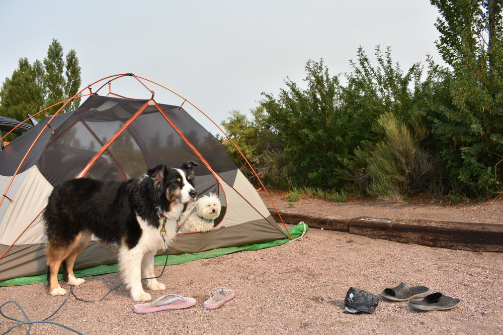 Watson & Riley at the campsite in Great Sand Dunes National Park Colorado | Watson & Walls