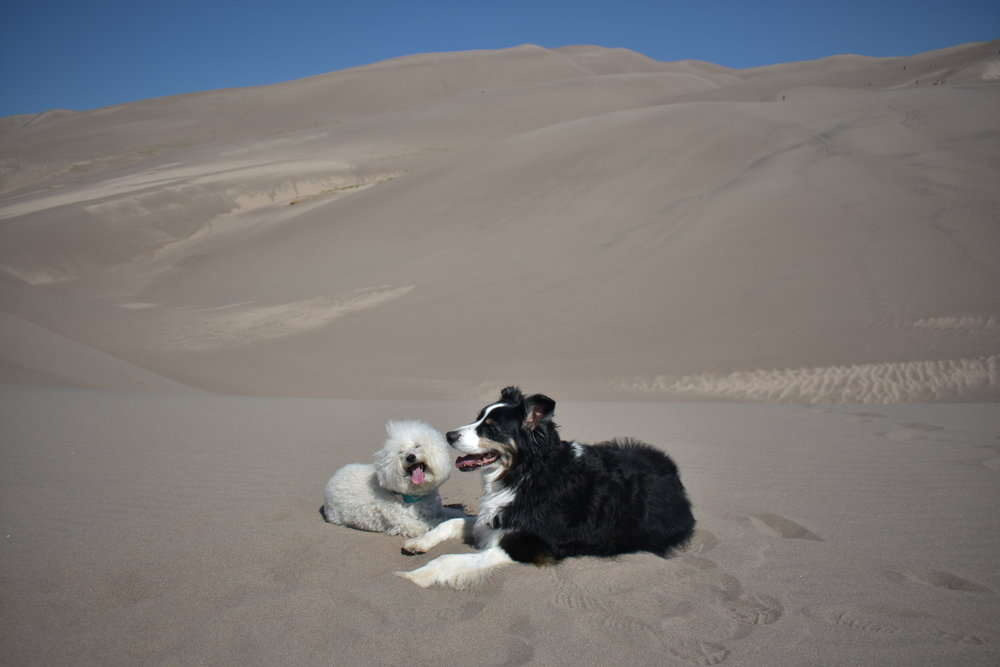 Watson and Riley at Great Sand Dunes National Park | Watson & Walls