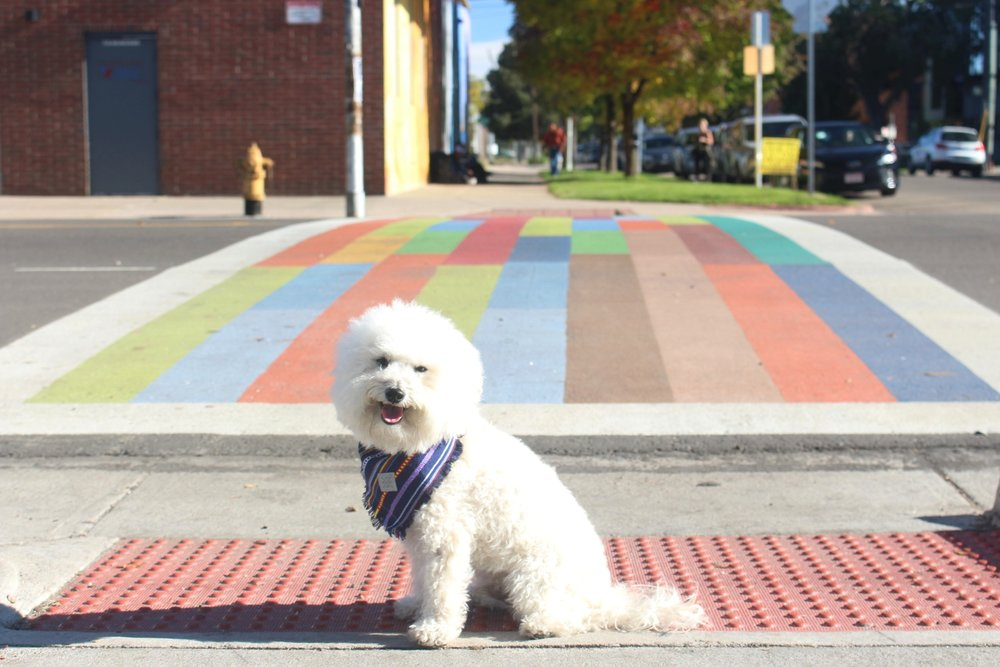 Rainbow crosswalk in Denver, CO | Watson & Walls