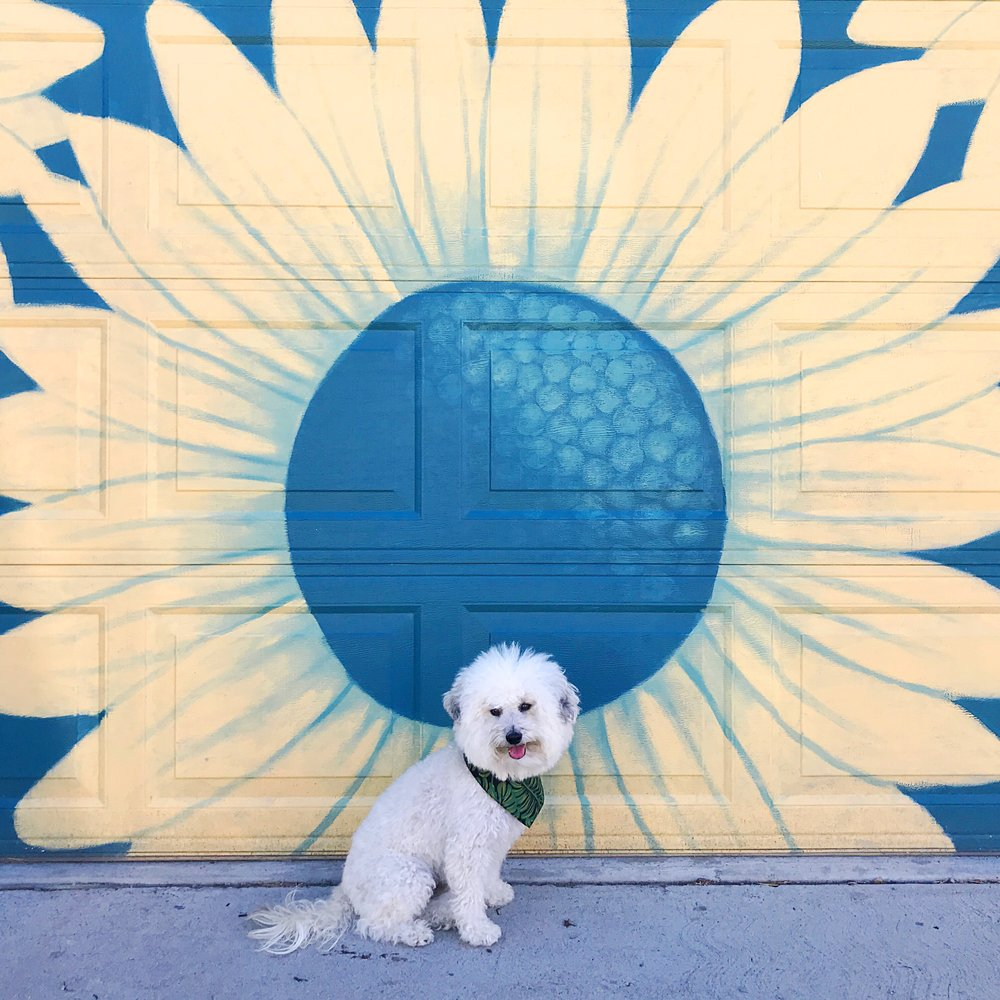 Sunflower mural in Denver, CO | Watson & Walls