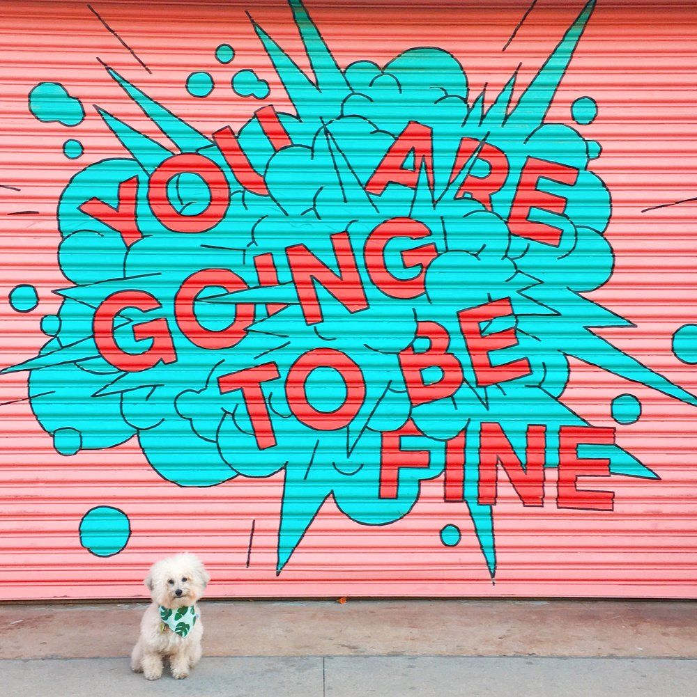 Watson shopping at dog-friendly The Row in Downtown Los Angeles | Watson & Walls