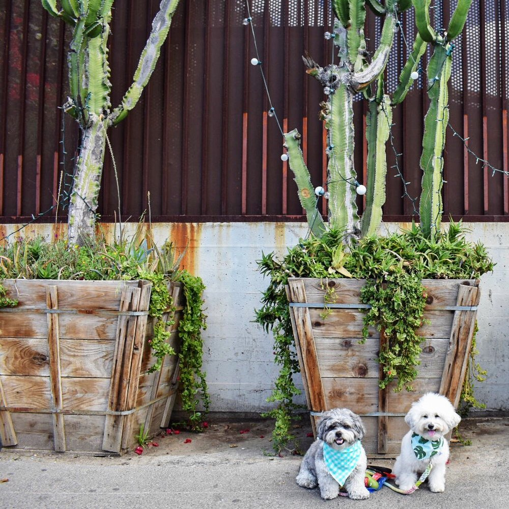 Cacti with cute dogs outside Resident DTLA | Watson & Walls