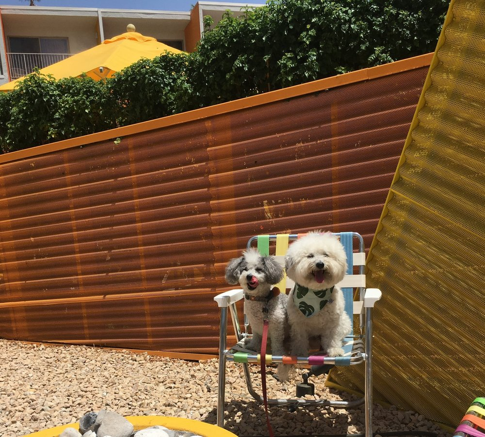 Two cute pups at The Saguaro in Palm Springs, California | Watson & Walls