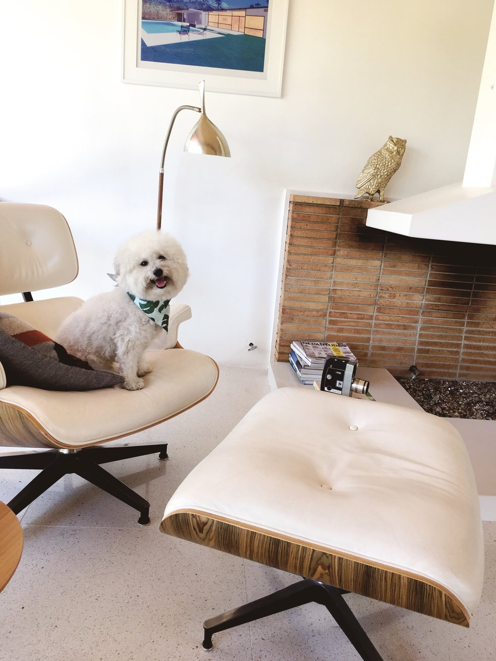 Watson at an Airbnb in an Eames chair Palm Springs, California | Watson & Walls