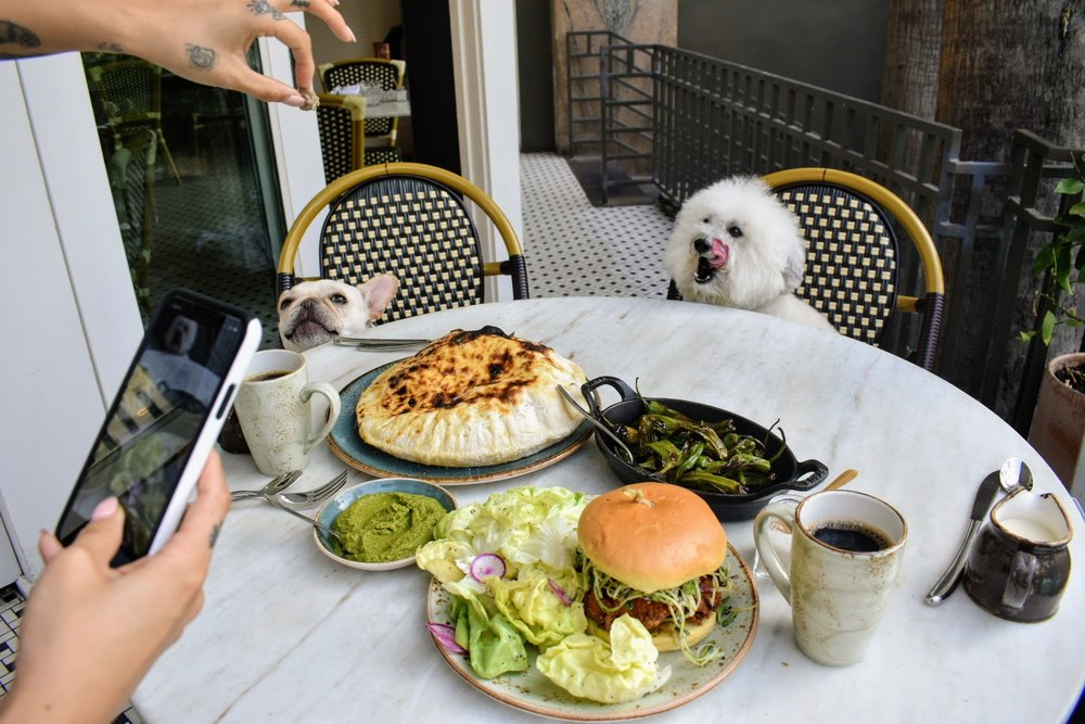 Behind the Scenes BTS of two cute dogs at the Fig restaurant Fairmont Miramar Santa Monica, California | Watson & Walls