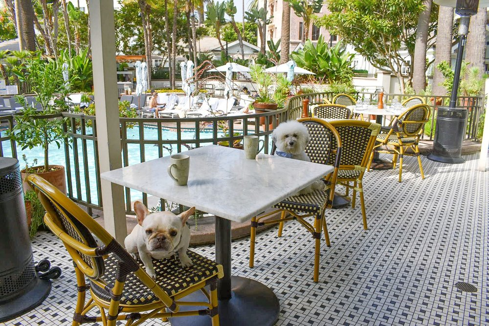 Cute dogs at the pool view Fig restaurant Fairmont Miramar Hotel Santa Monica | Watson & Walls