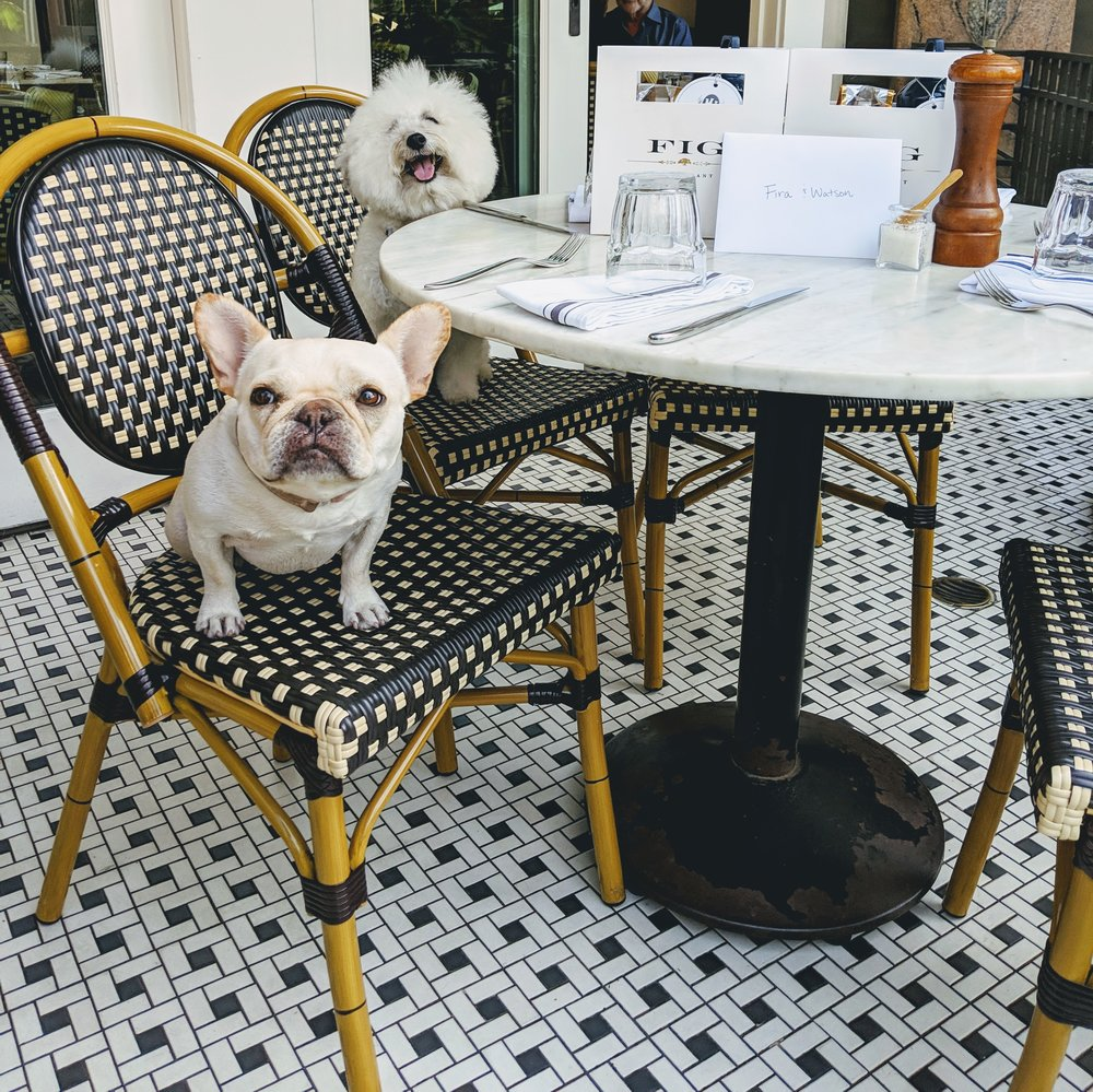 Cute dogs, WTFrenchie, at the Fig restaurant Fairmont Miramar Hotel Santa Monica | Watson & Walls