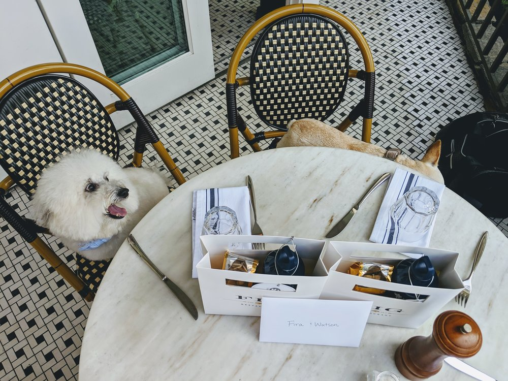 Cute dogs at the Fig restaurant Fairmont Miramar Hotel Santa Monica | Watson & Walls
