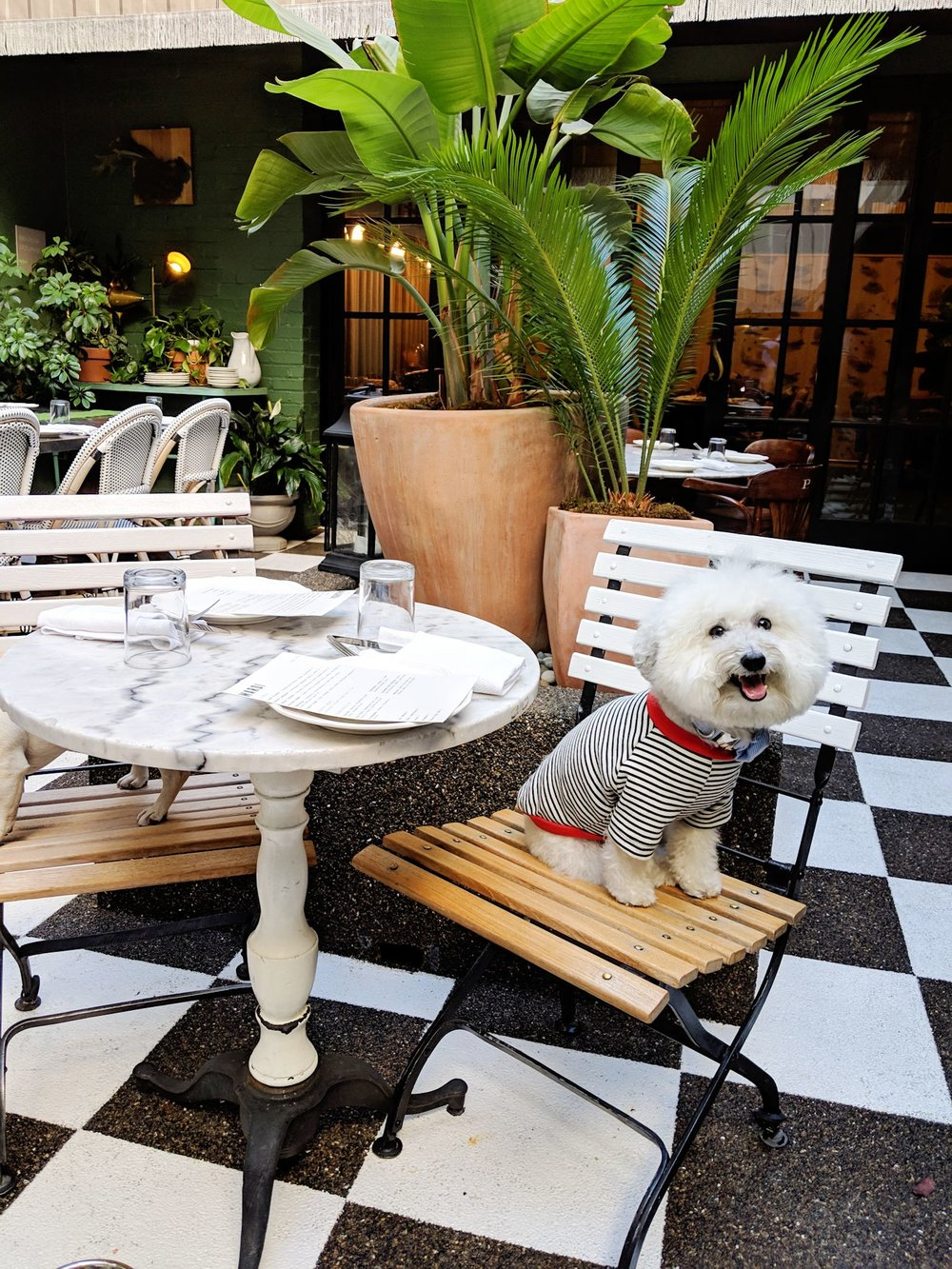 Watson in his Striped Shirt at Mardi Palihouse West Hollywood hotel restaurant | Watson & Walls