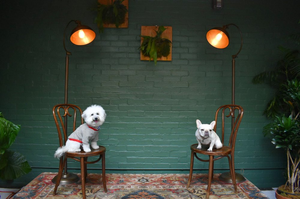 Watson and Fira the frenchie posing at Mardi Palihouse West Hollywood hotel restaurant | Watson & Walls
