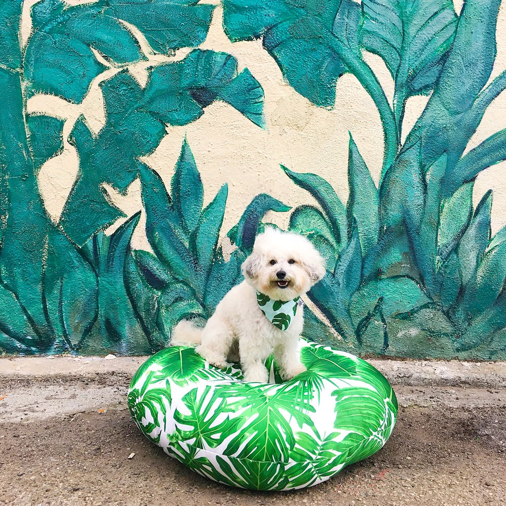 Cute fluffy dog by a palm frond leaf mural in Venice Beach, CA | Watson & Walls
